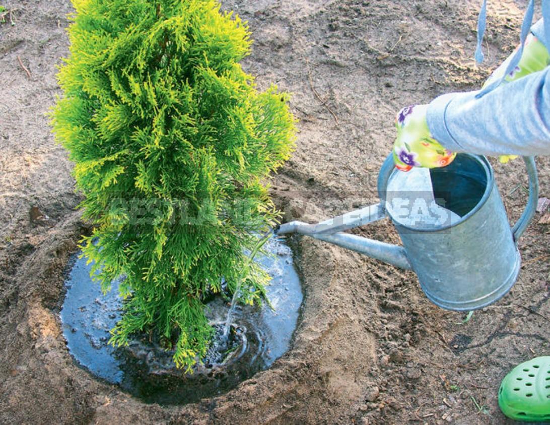 Secrets Of Garden Beauty From a Professional