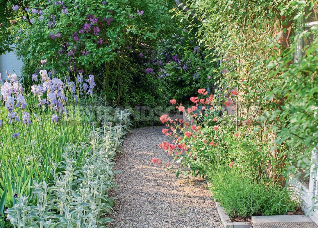 Beauty Without Borders: What To Plant In The Problem Area Near The Walls Of The House