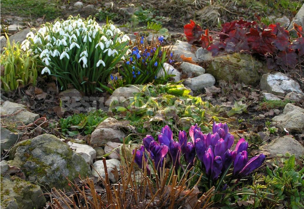 Bulbous In Garden Design: Working On Mistakes