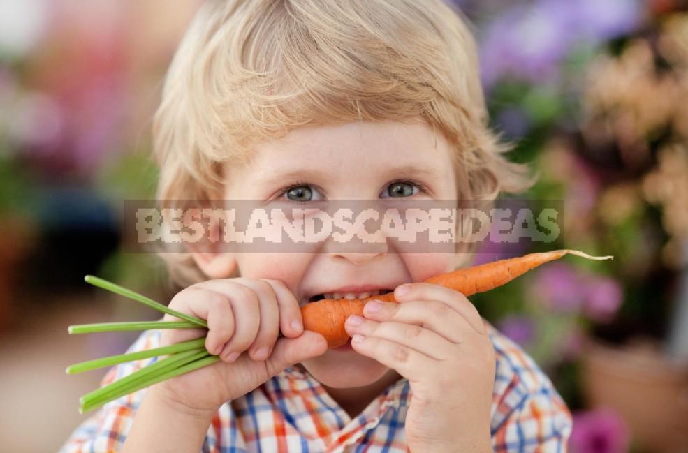 Colorful Wonders: Unusual Varieties Of Carrots And Beets