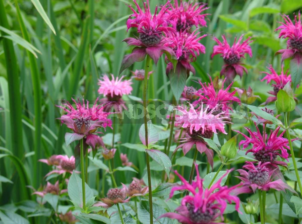 Garden Of Herbs: We Select Plants (Part 1)