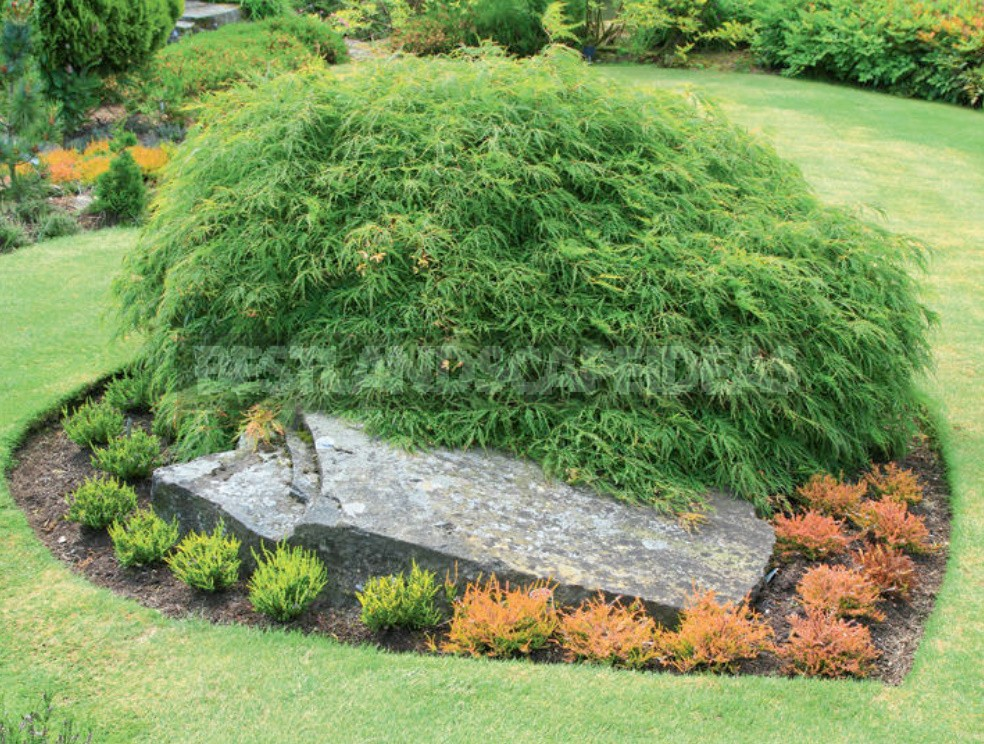 Ideas For Using Stone In The Garden: Choose a Place And Create Beautiful Combinations