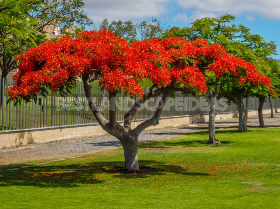 Rare Exotic Trees That Can Grow In The Middle Lane
