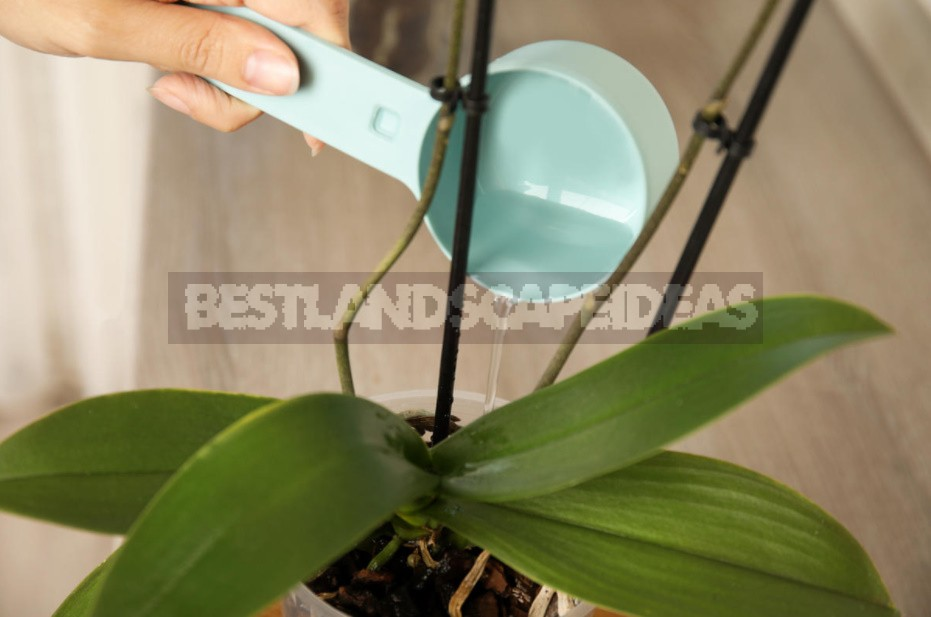 Top Dressing For Orchids From Banana Peel: 3 Simple Recipes