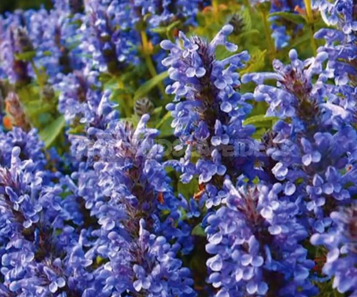 Unpretentious Plants For a Bright Flower Garden