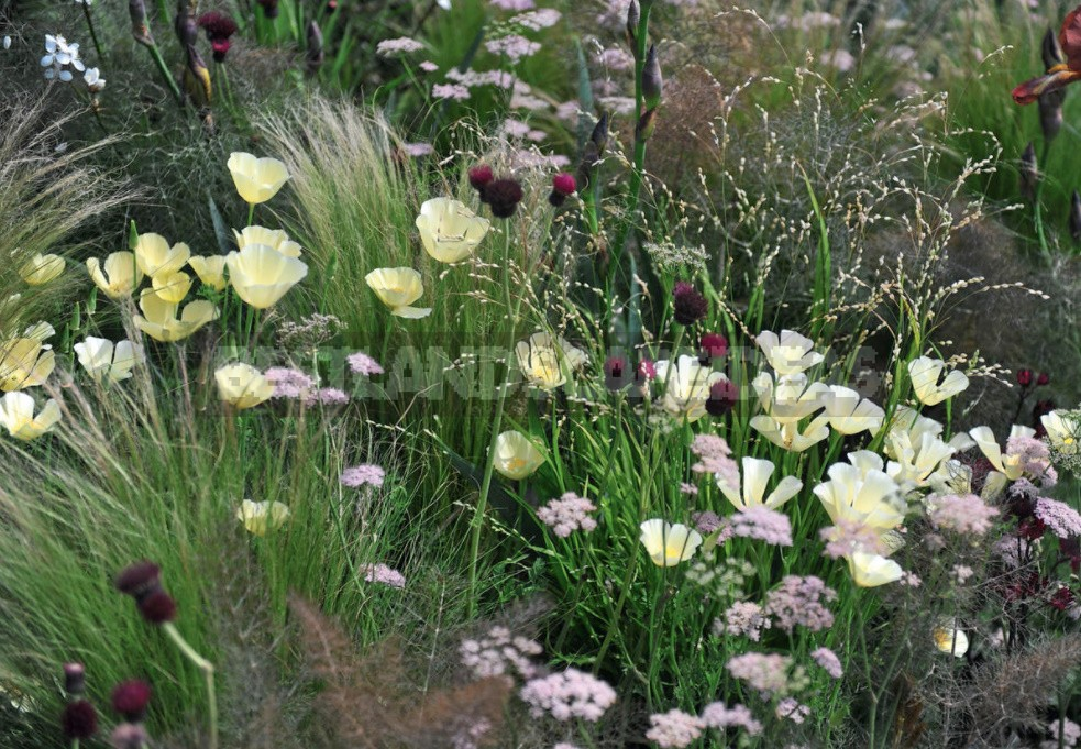 15 Plants With An Unusual Texture: We Create Flower Beds That Are Pleasant To The Touch