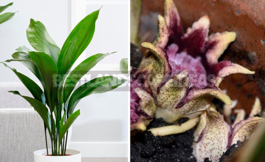 How Does Aloe And Other Ornamental Houseplants Bloom (Part 1)