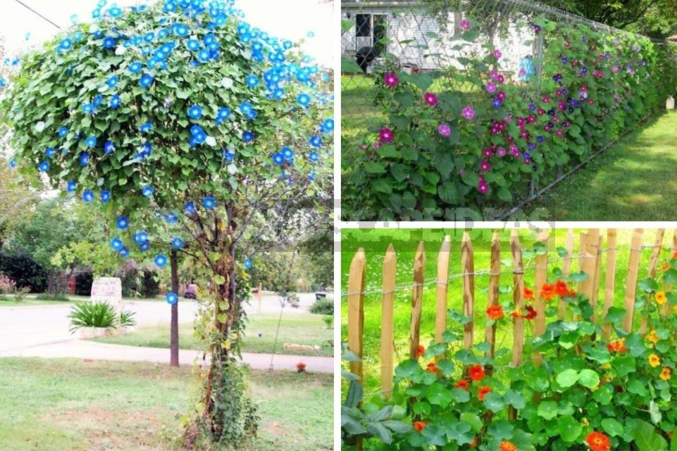 Plant Supports: For Support And Beauty