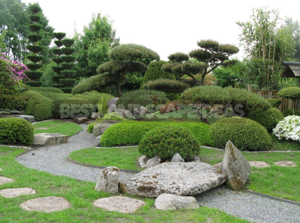 Border Zone: Secrets of Beautiful Border Design of Flower Beds and Plantings