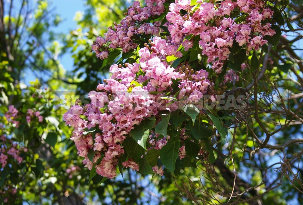 Best Garden Exotic Trees: Names and How to Grow