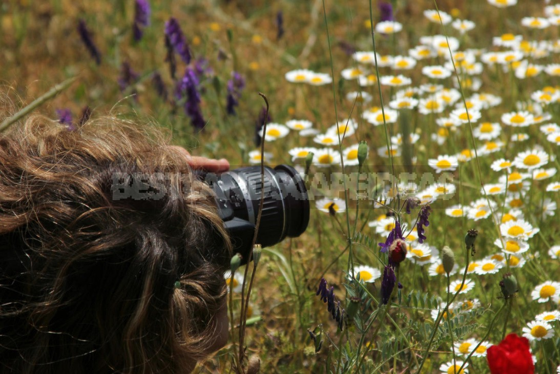 5 Tricks How to Photograph Flowers at Close Range