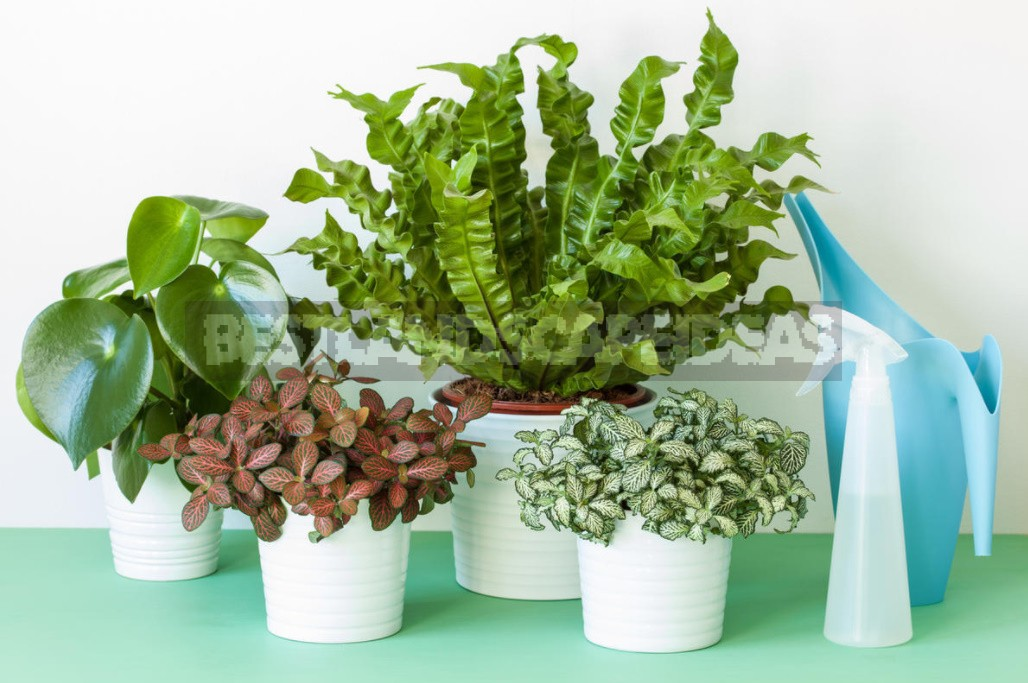 How to Make Yeast Top Dressing for Indoor Plants