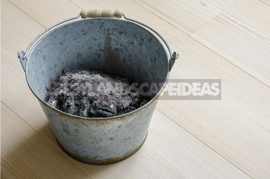Ash: How It Can Be Useful For a Summer Resident (Part 2)
