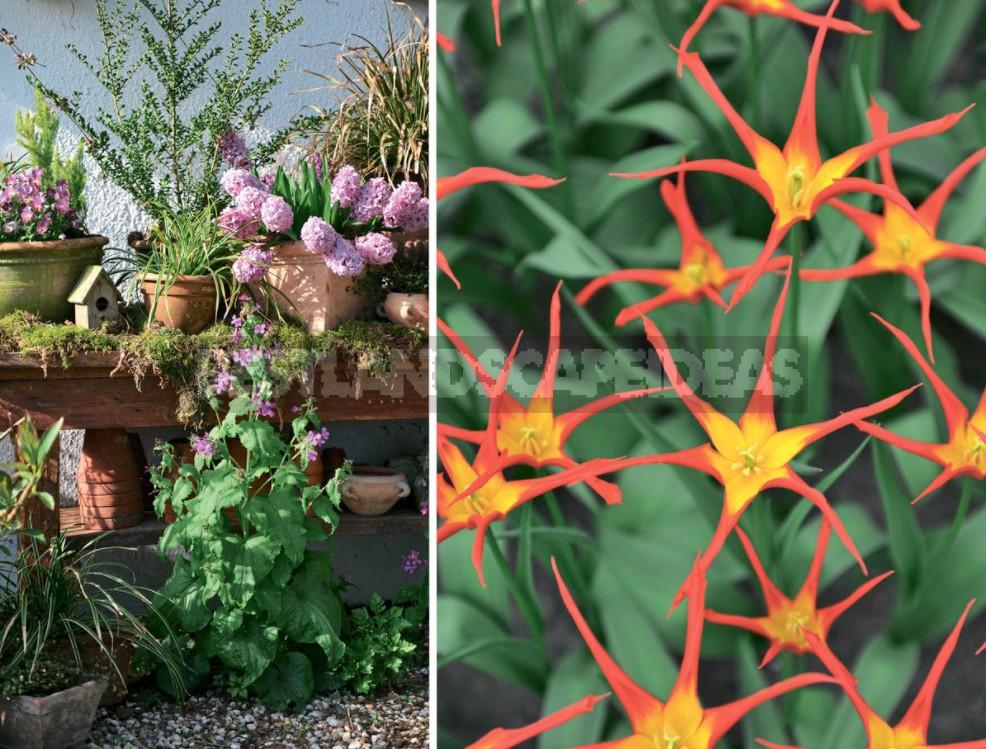 How To Plant Bulbous Plants Beautifully: 10 Design Ideas