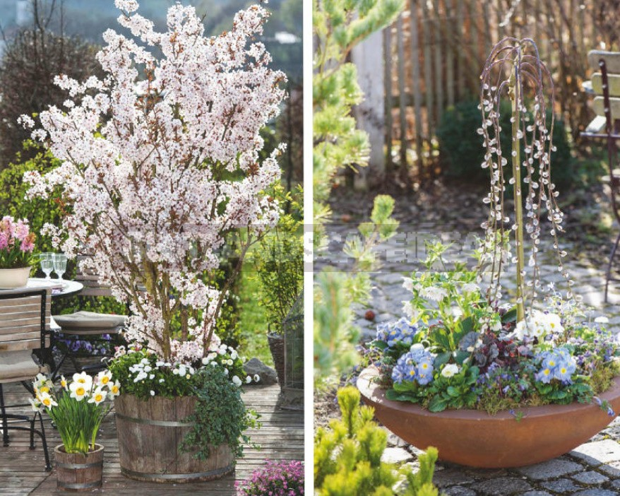 Ornamental Trees And Shrubs That Bloom In Spring