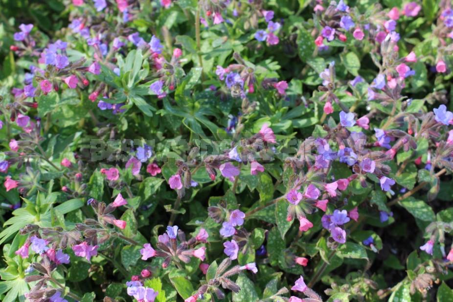 The Five Safest Medicinal Plants