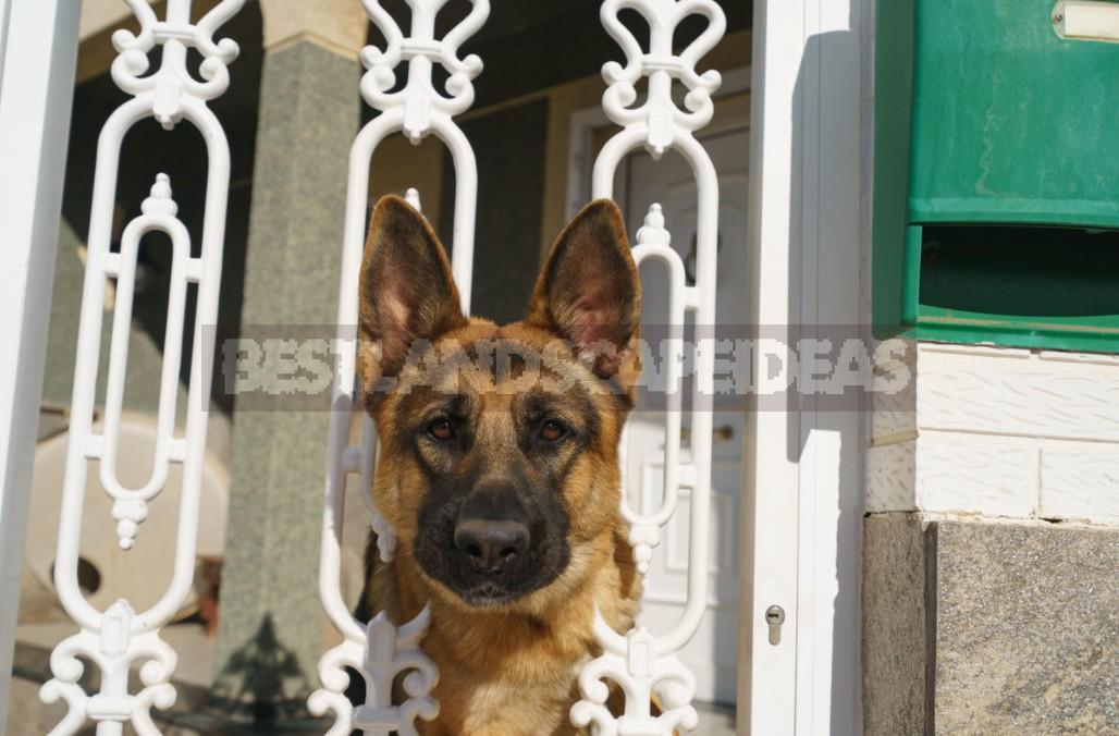 Five Available Ways To Protect a Country House From Intruders