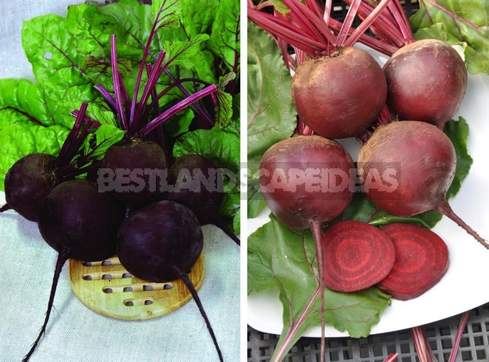 Healthy Selection, Or How Healthy Vegetables Are Created