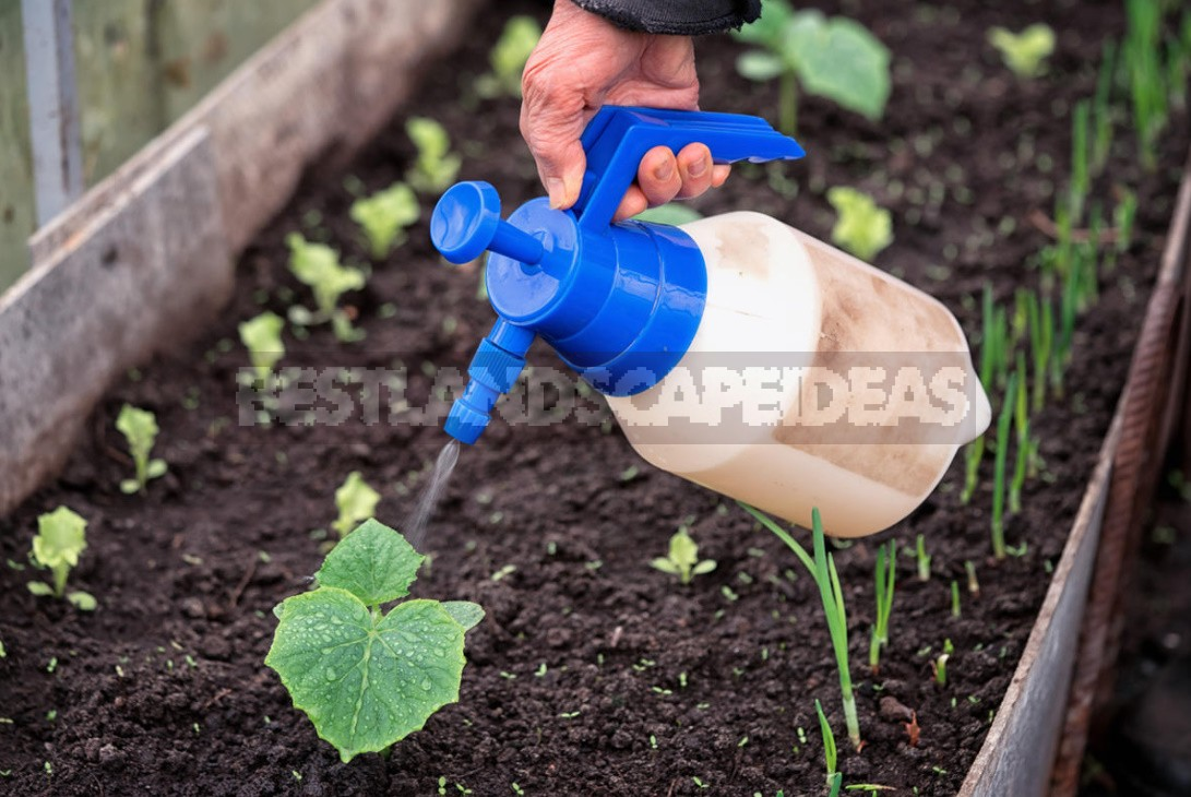 Spring Preparation Of Greenhouses And The First Crops In Them