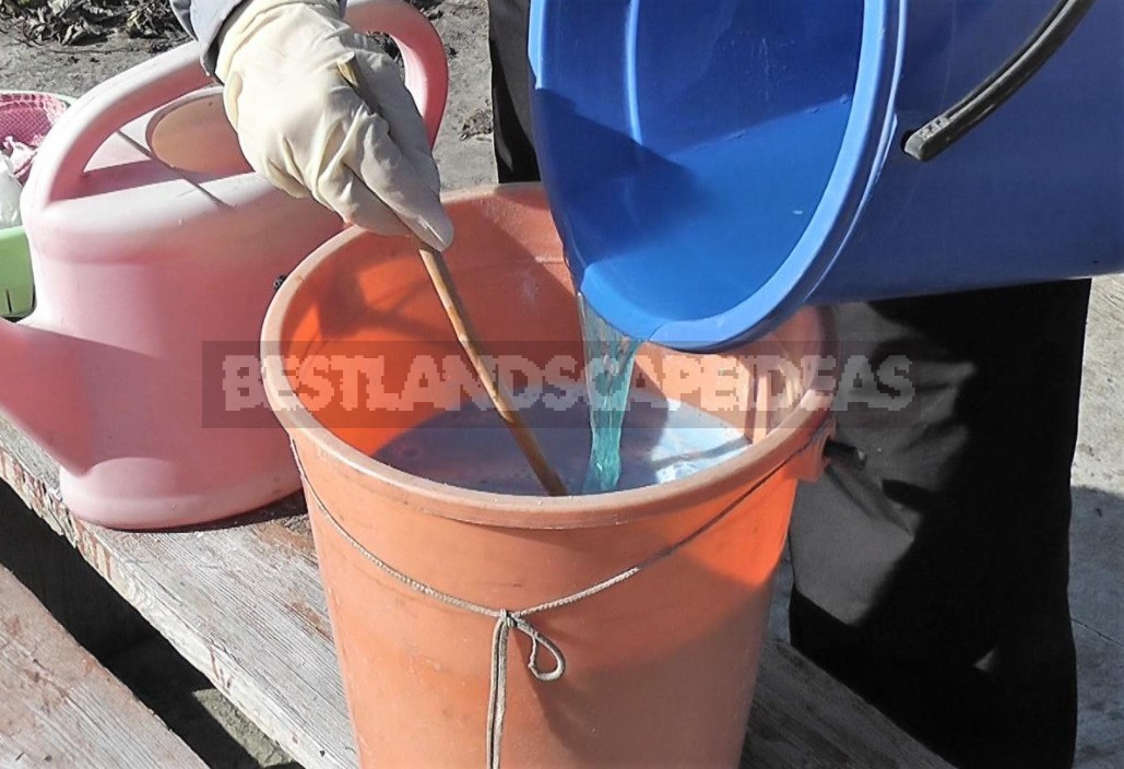 The Use Of Copper Sulfate In The Garden. Detailed nstructions For Preparing Bordeaux Liquid (Part 2)
