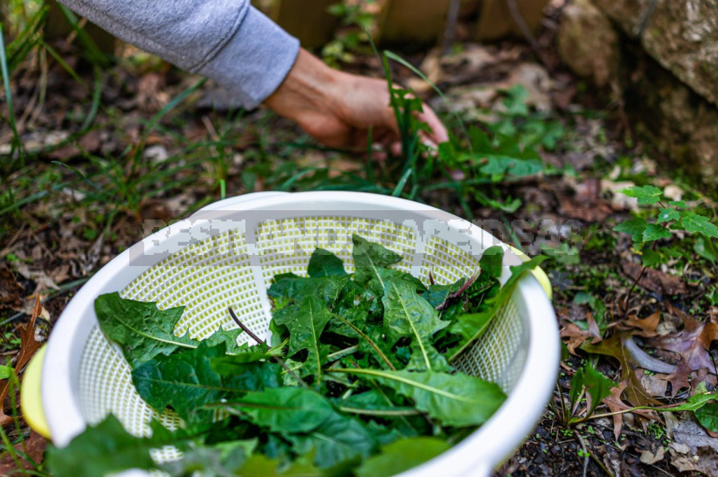 Weeds For a Snack: Unexpected Recipes For Healthy Dishes